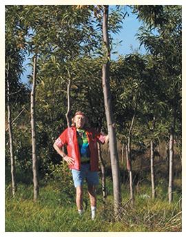 Baron and his Koa tree seed orchard